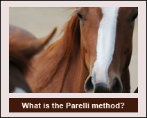 Find out more about what the the Parelli Method is?